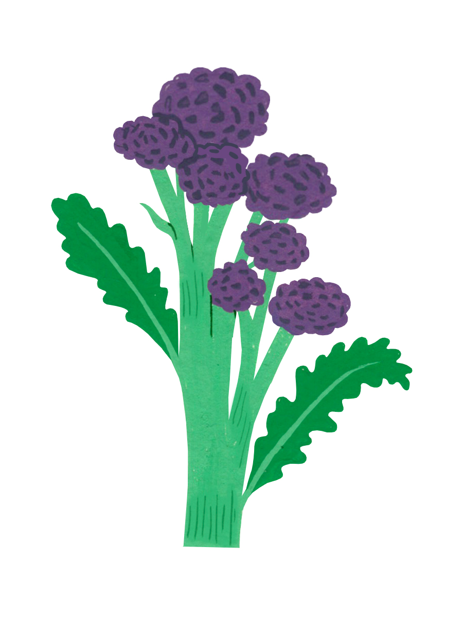 Thumbnail for purple sprouting broccoli